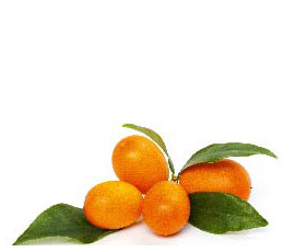 ingredient_oil_of_kumquat